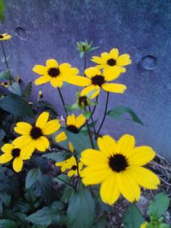 黄色いお花みたいな人になりたい